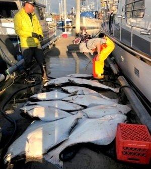 Alaskan Halibut Fishing Packages